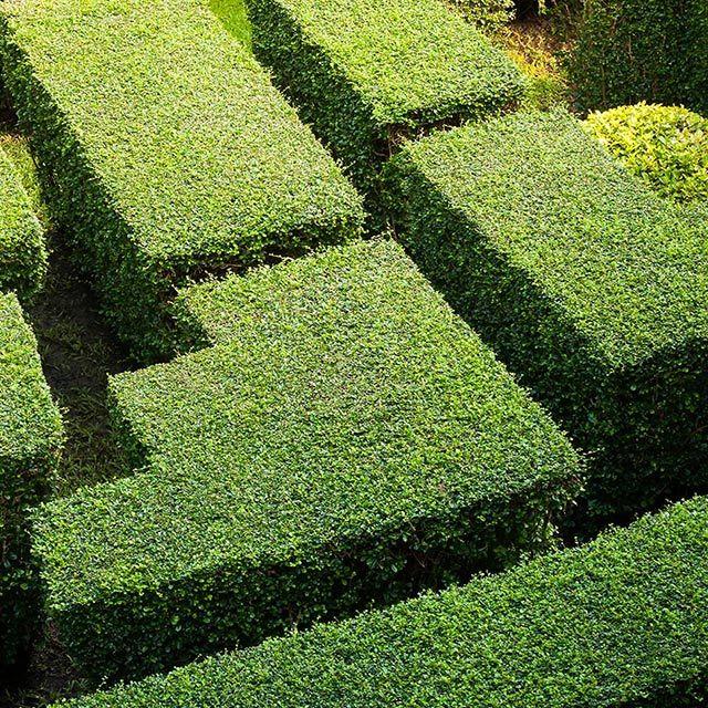 L'importanza del verde